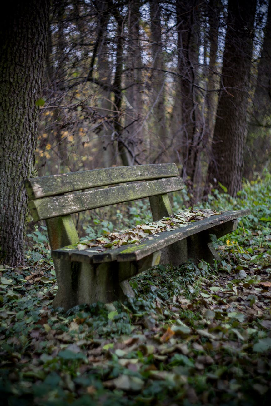 Park Bench advice that Changed My Life!